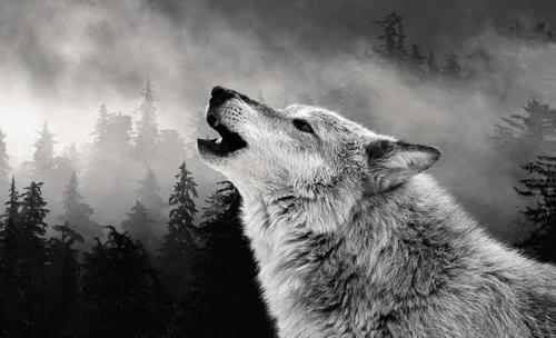 Friedrich Hielscher, Nous appelons tes loups