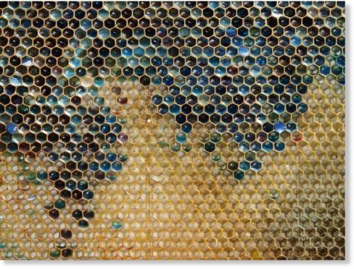 m&ms,miel bleu,mutations,colorants dangereux,malbouffe,saloperies,cochonneries de merde à la con,etc...